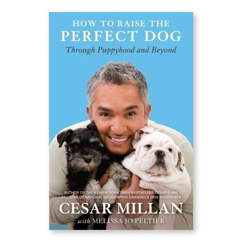 How To Raise The Perfect Dog - Cesar Millan