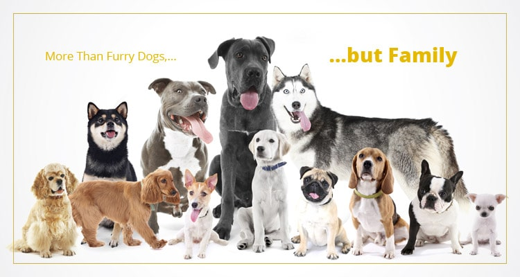 Buy A Dog Nigeria Homepage Banner