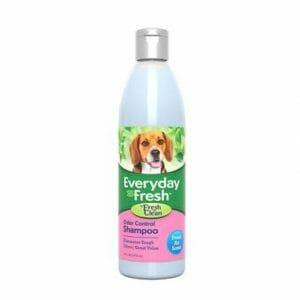 Everyday Fresh™ by Fresh 'n Clean® - Odor Control Shampoo - Fresh Air Scent