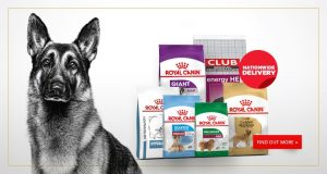 Buy A Dog Nigeria Home Banner-Royal Canin