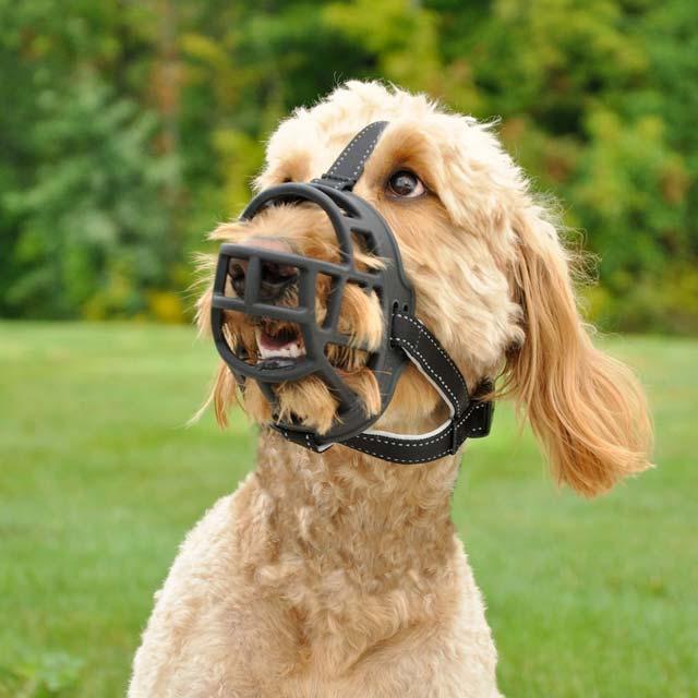 Rosewood Soft Basket Muzzle Size Pup
