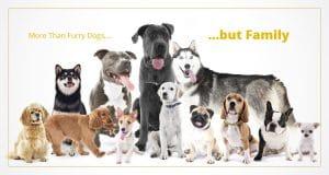 Buy A Dog Nigeria Homepage Banner