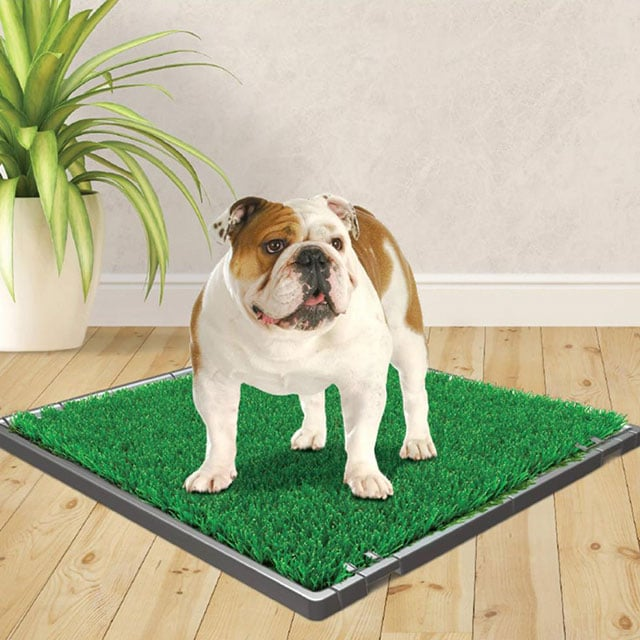Four Paws Wee-Wee Premium Patch Indoor and Outdoor Pet Potty_3